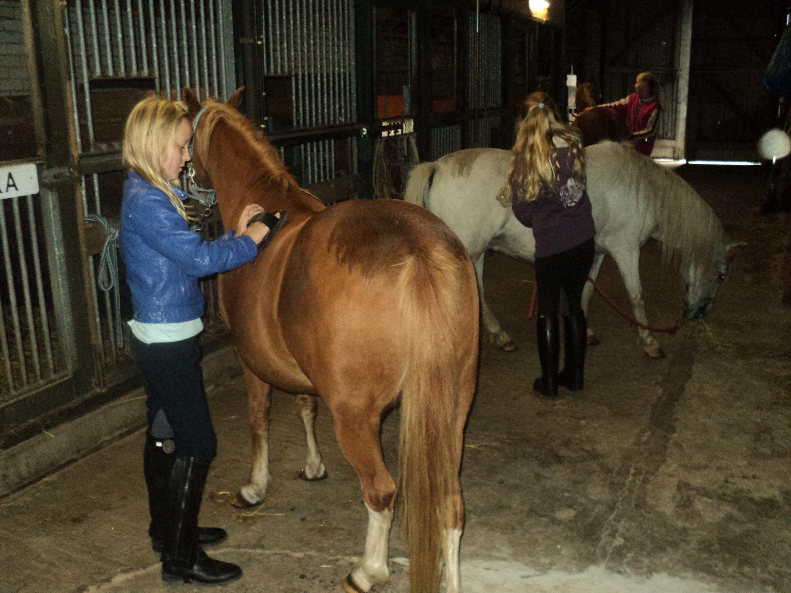 New Kinderfeestje met paarden en pony's - Hoeve Mazzeltov #BF98