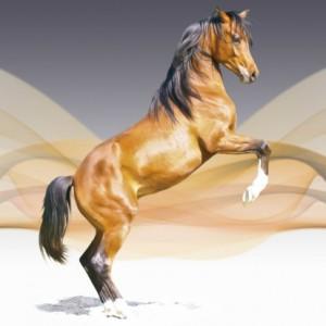 Uros, een bijzonder paard